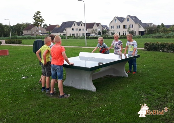 Table de ping-pong verte
